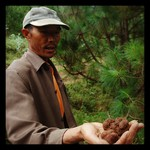 Tuber indicum gathering in Yunnan